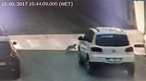 Animali, incidenti e sanzioni: gatto investito sulle strisce pedonali
